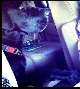 Darwin Alerts in the car
